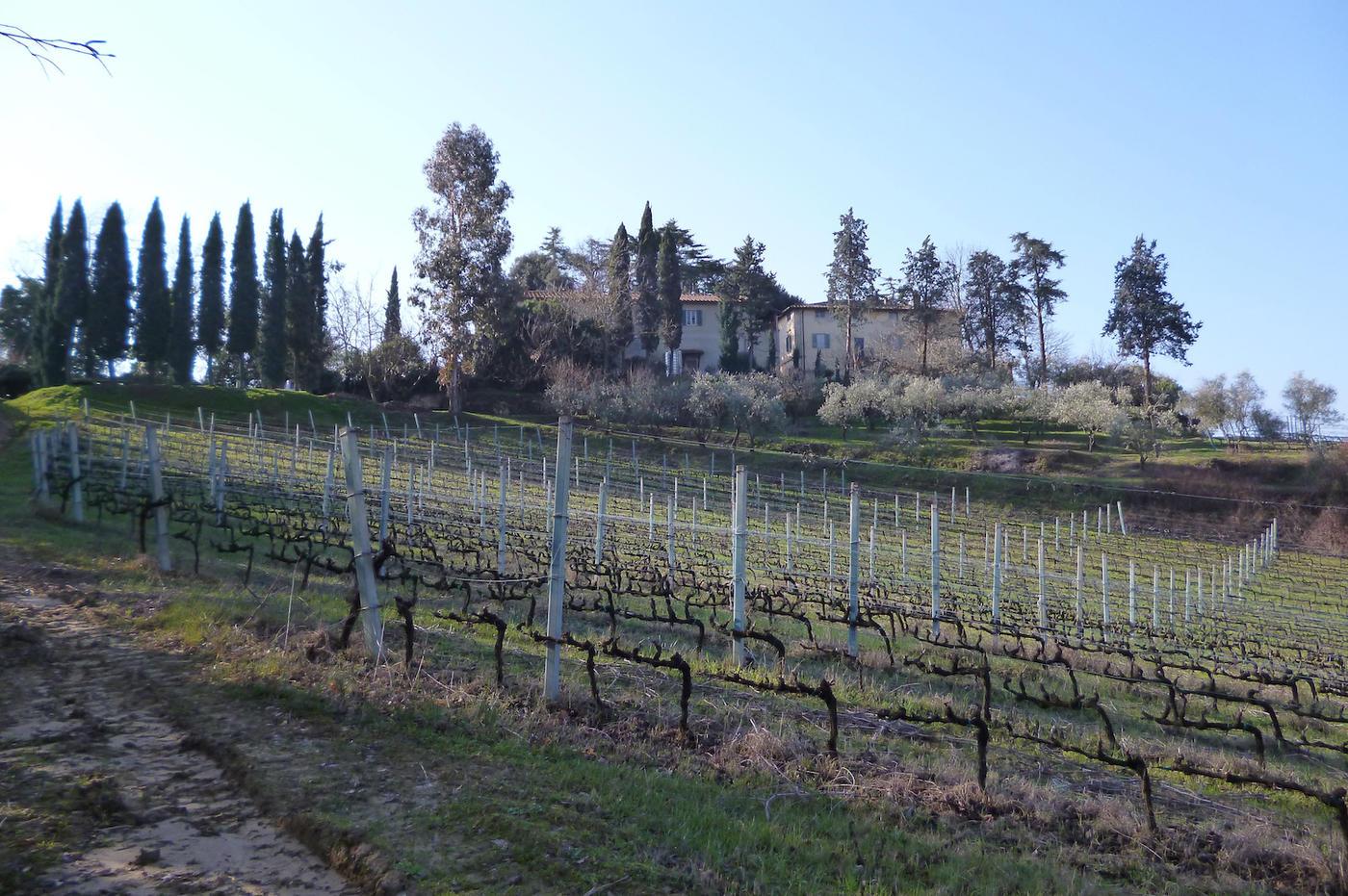 Azienda vitivinicola e olivicola in vendita sulle colline Pisane